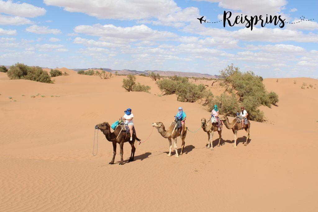 Een kamelensafari door de Sahara in Marokko.